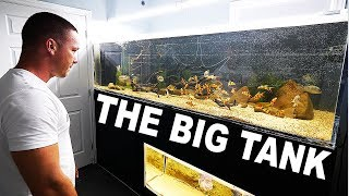Large aquarium update and cleaning | The King of DIY