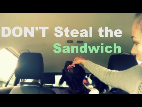 don't-eat-the-sandwich!-forbidden-fruit-syndrome-follow-up