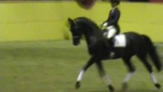 Swedish Warmblood, Newly approved stallions 2009, part 2