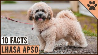 Lhasa Apso Dog Breed  Top 10 Facts