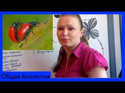 Урок биологии №11. Виды размножения.