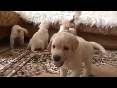 22 игры со щенками / 22 Hundespiele (2007) PC скачать