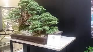 SM Supermalls partners with Philippine Bonsai Society to bring in Sanib Pwersa bonsai exhibit a