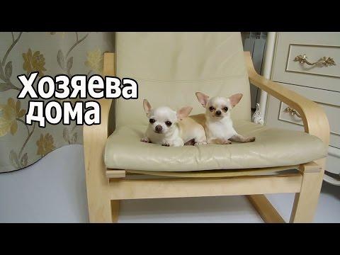 VLOG: Грустный влог / Мы остались без собакиз YouTube · С высокой четкостью · Длительность: 14 мин11 с  · Просмотры: более 2188000 · отправлено: 13.12.2015 · кем отправлено: Ekaterina Saibel