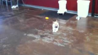 Off Leash Dog Training Classes