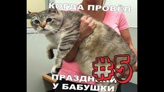 Лютые приколы. Бабушка откормила кота +40кг. Шок!!!