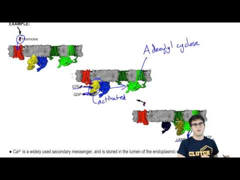cAMP and Adenylyl Cyclase