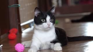 """Желаете завести себе друга? Обратите внимание на котят и кошек на передержке группы """"Верный хвостик"""""""