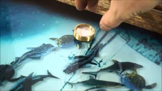 Нарды с рыбками плавающими внутри - V2. Лайкни видео !(, 2015-09-07T13:29:43.000Z)