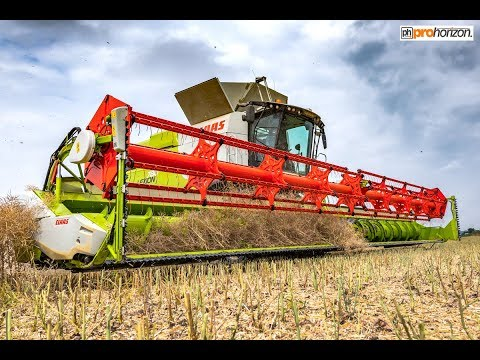 Harvest 2018 - CLAAS Lexion 780 TT on its first 2018 harvest of OSR - Nottinghamshire UK