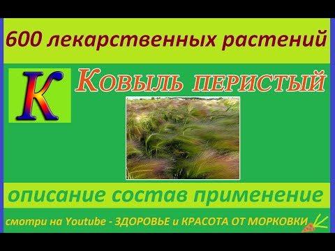 ковыль перистый 600 лекарственных растений