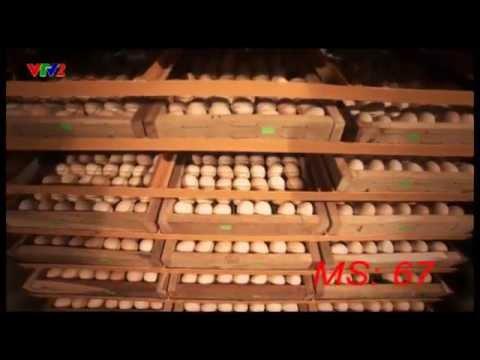 MS67-Máy ấp trứng