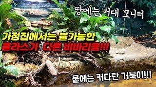 국내유일! 비바리움과 파충류가 끝장나는 공간!!