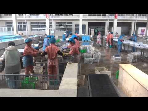 North Korea: Seafood Processing Factory & Shoe Factory in Rason 北朝鮮:羅先の海産物工場と靴工場