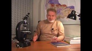 видео украинский щит