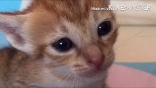 Cute kittens meowing
