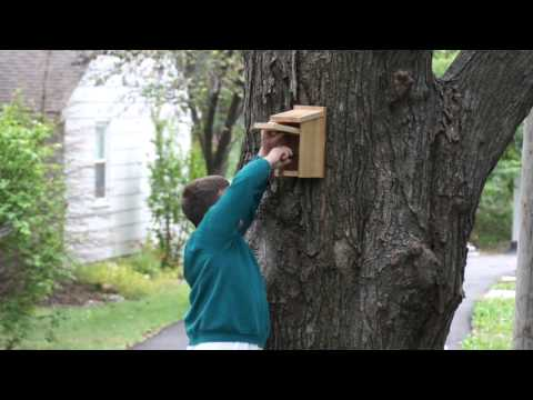 How to Mount a Bluebird House