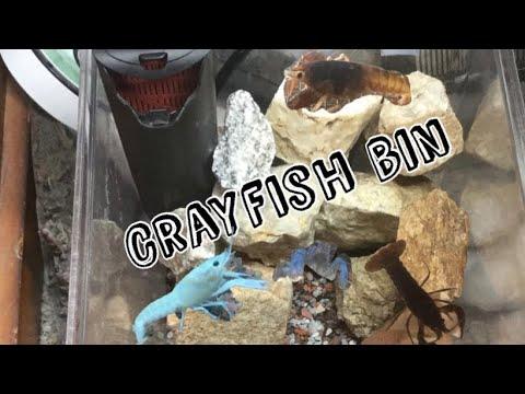 How To Make A Crayfish Bin