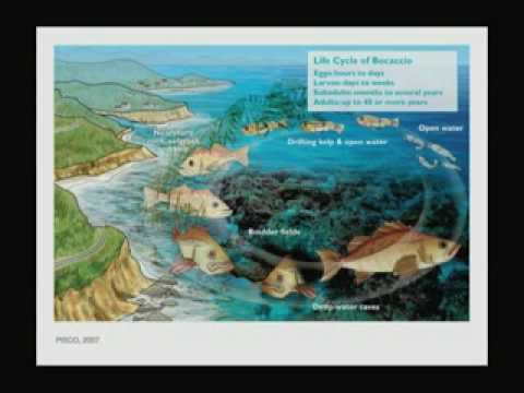 Gulf of California's Deep-Sea Secrets - Perspectives on Ocean Science