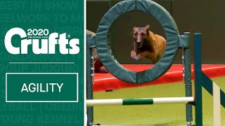 Large International Agility (Agility Round)  Part two | Crufts 2020