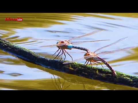 الحياة البرية بالمغرب AFMO Wildlife in Morocco