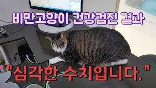 비만 고양이 건강검진결과+처방 이후의 놀라운 결과