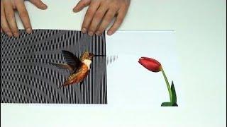 Amazing Animated Optical Illusions - SUMO Crafts