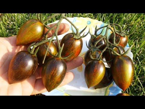 Помидоры Атомный Виноград Бреда -  Brad's Atomic Grape Tomato
