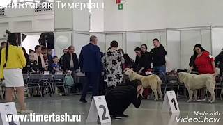 2 июня 2018 Выставка собак в Тюмени Тимерташ Тимерхан Могучий 3 место БЭСТ щенков