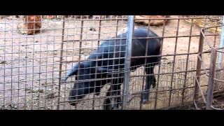 Zoo Natural Parc Mallorca 2014