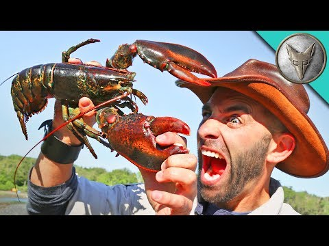 Thumbnail: PINCHED by a LOBSTER!
