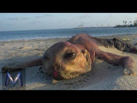 5 Bangkai Aneh Yang Terdampar di Pantai