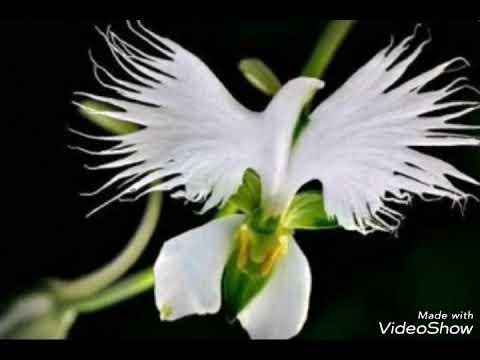 As Flores Mais Lindas Do Mundo Youtube