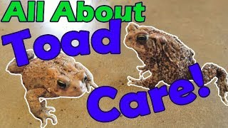 How to Take Care of Toads!