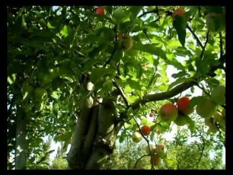 Youtube filmek - Csodabogarak - A barátság almája (2.évad 7.rész)