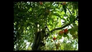 Csodabogarak - A barátság almája (2.évad 7.rész)