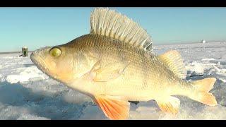 Тяжелая рыбалка в одиночку на щуку и окуня подводные съемки
