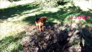 The hunting dog BOB!? BOB le chien de chasse !? http://yoyobob.blog...