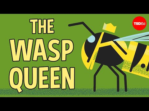 Video image: Licking bees and pulping trees: The reign of a wasp queen - Kenny Coogan