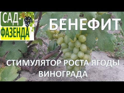 Стимулятор роста ягод винограда - Бенефит