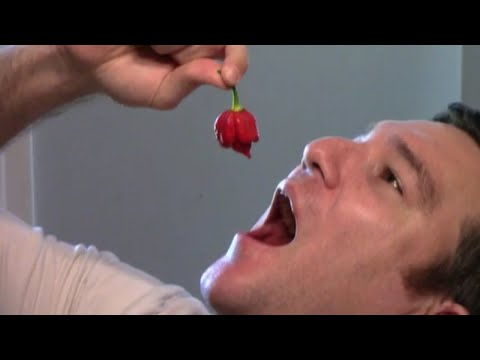 Eating A Trinidad Scorpion Pepper - 2,000,000 Scoville Heat Units