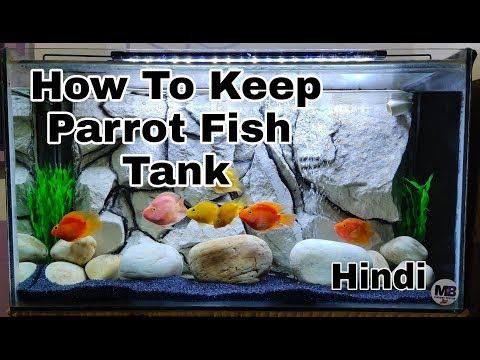 Parrot Fish Tank ! How To Keep Parrot Fish Tank