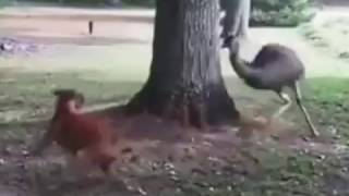 bird tries to catch a dog