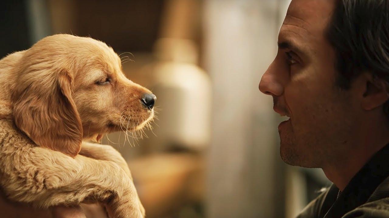 """Mi amigo Enzo"""", la película que te hará llorar – Venus Media"""