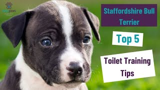 Top 5 Toilet training tips for your Staffordshire Bull Terrier Puppy