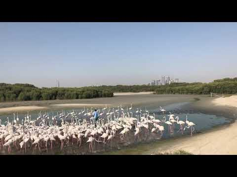 Flamingo at Ras Al Khor Wildlife Sanctuary