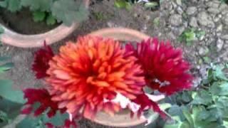 manipuri song-punsisina ahanba mangfaonarakpa matamda-mp4/audio