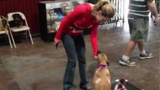 Pet Obedience Class - Sit Means Sit