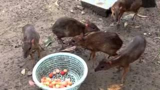 Cheo cheo ở Trang Trại Động vật hoang dã Thanh Long