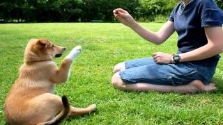 Amazing Dog Training Man